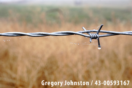 Dew on the barbed wire fence - Gregory Johnston